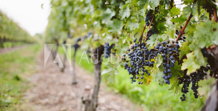 Wine & Brewery Tours